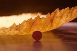 elm-leaf-231857_640