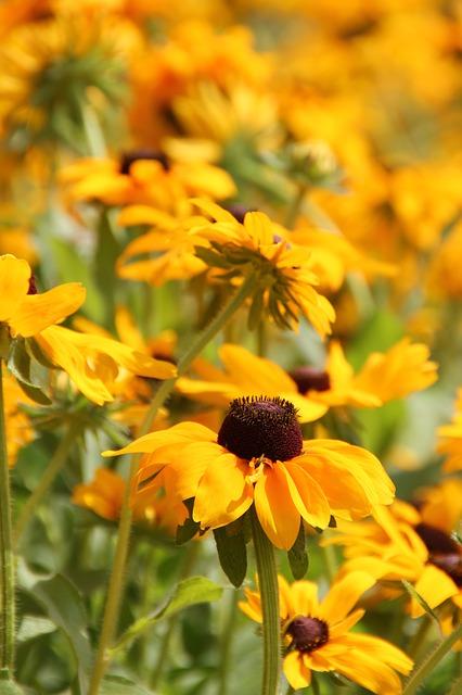 flowers-418373_640
