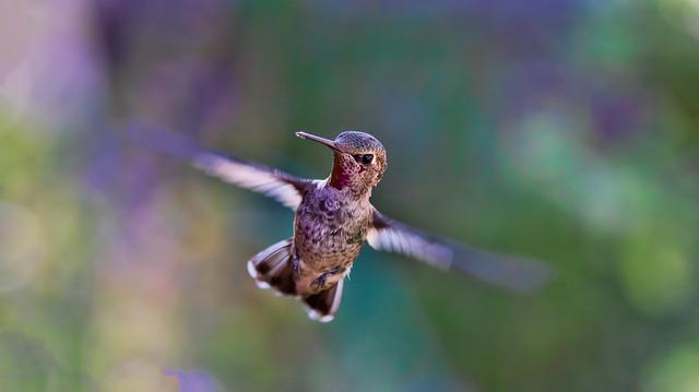 hummingbird-691483_640
