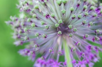 flower-1256056_640