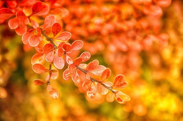 autumn-510470_640
