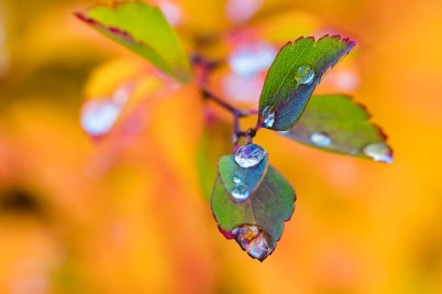 leaves-1804646_640